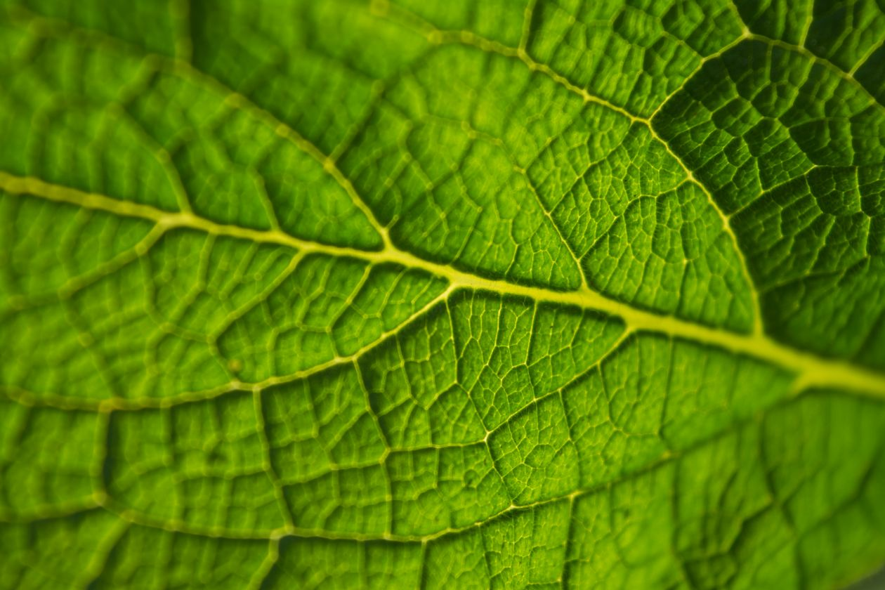 "Free photo ""Leaf"" by Rodion Kutsaev"
