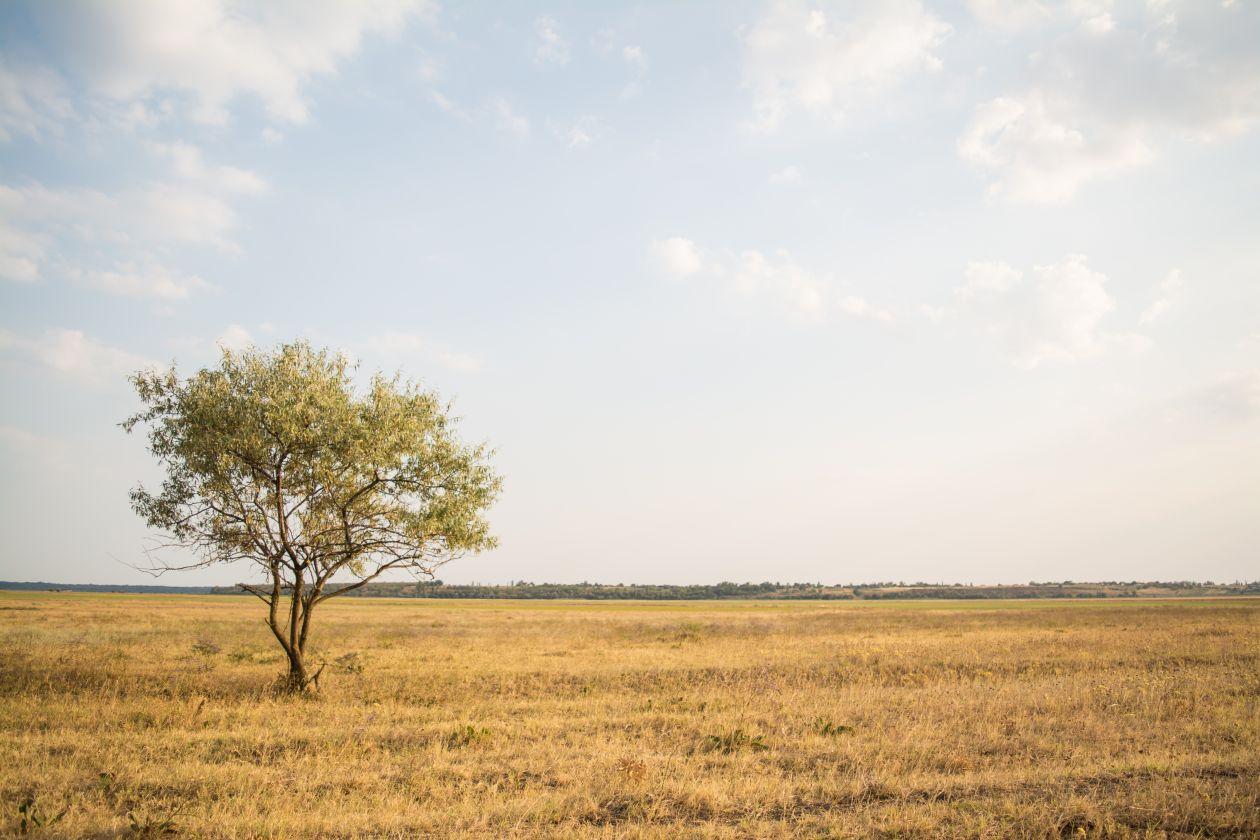 """Free photo """"Tree"""" by Rodion Kutsaev"""