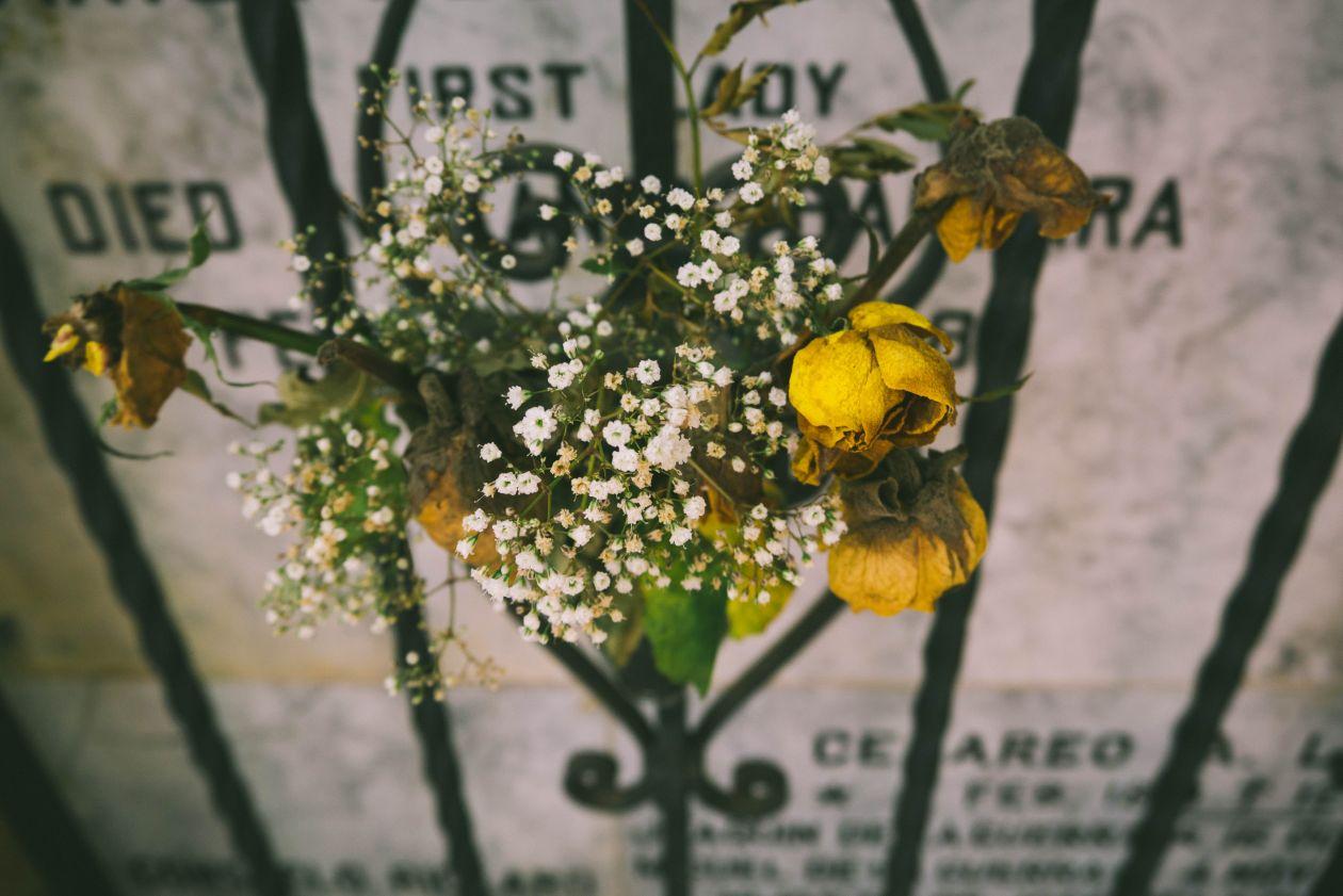 """Free photo """"Rose"""" by Greg Ortega"""