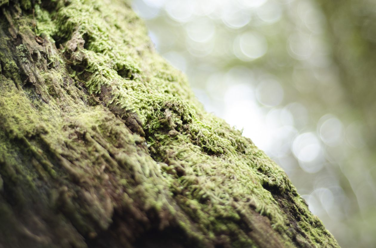"Free photo ""Moss"" by Kory Pence"