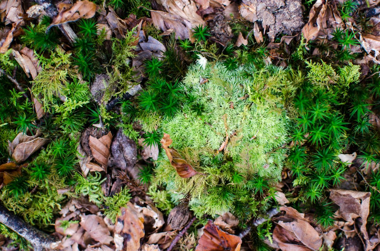 "Free photo ""Moss"" by Gary Rockett"