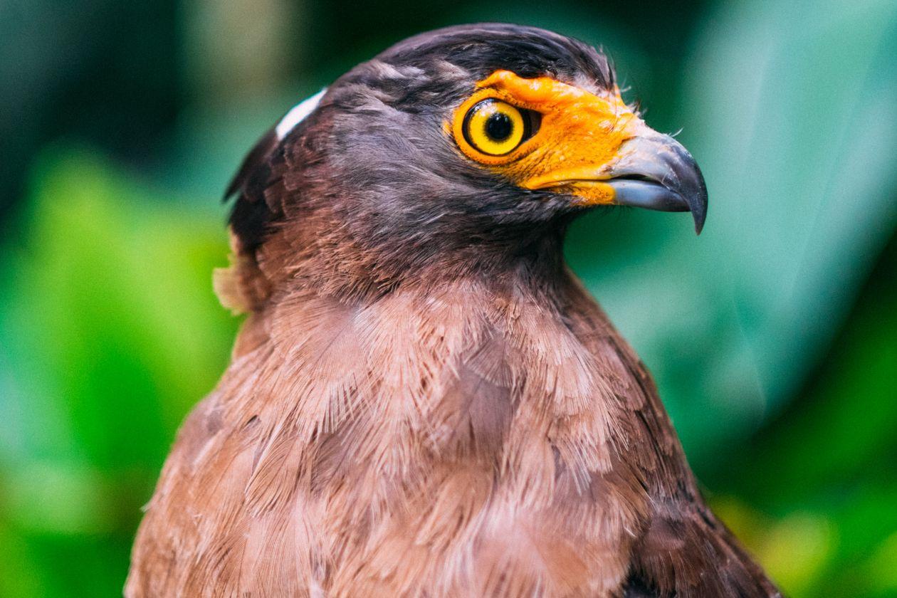 "Free photo ""Bird"" by Jay Wennington"