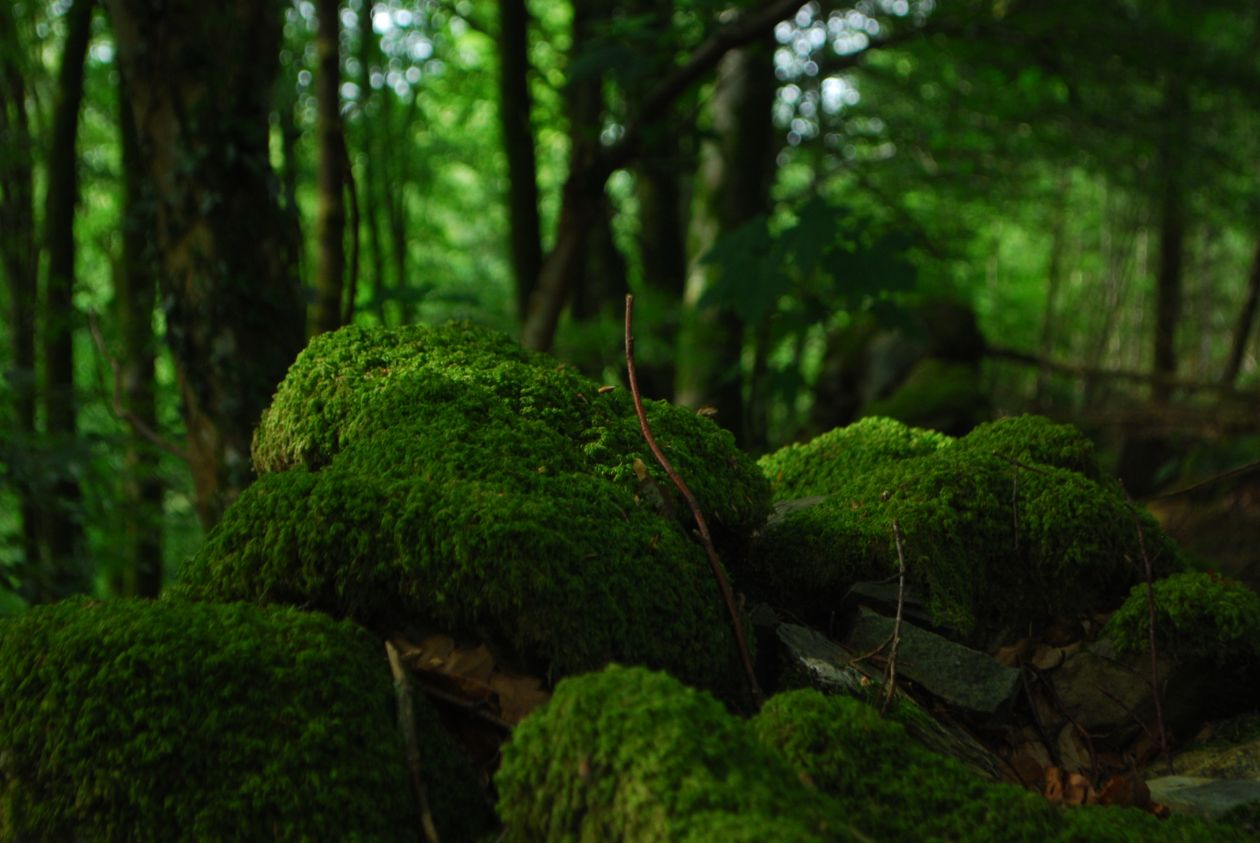 "Free photo ""Forest"" by Jeff Cooper"