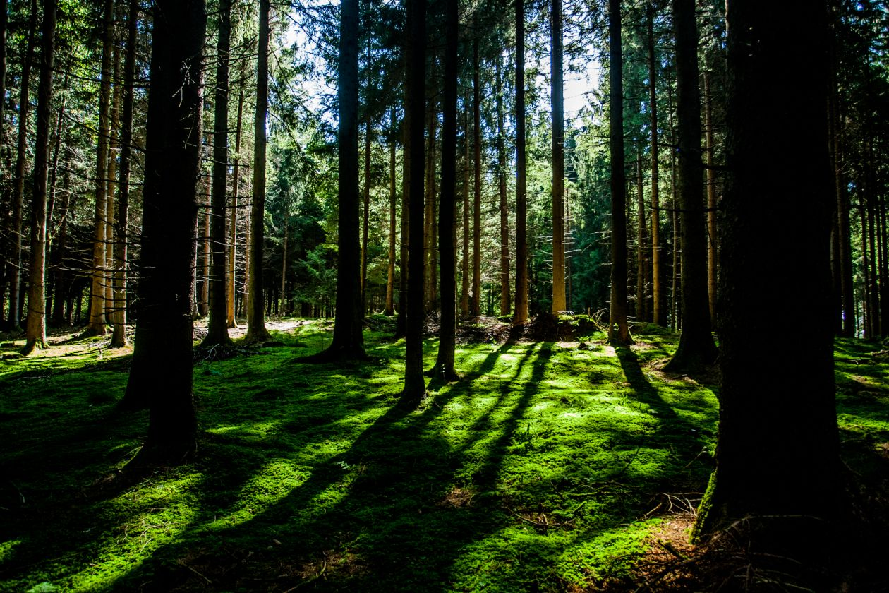 "Free photo ""Forest"" by Sven Schlager"