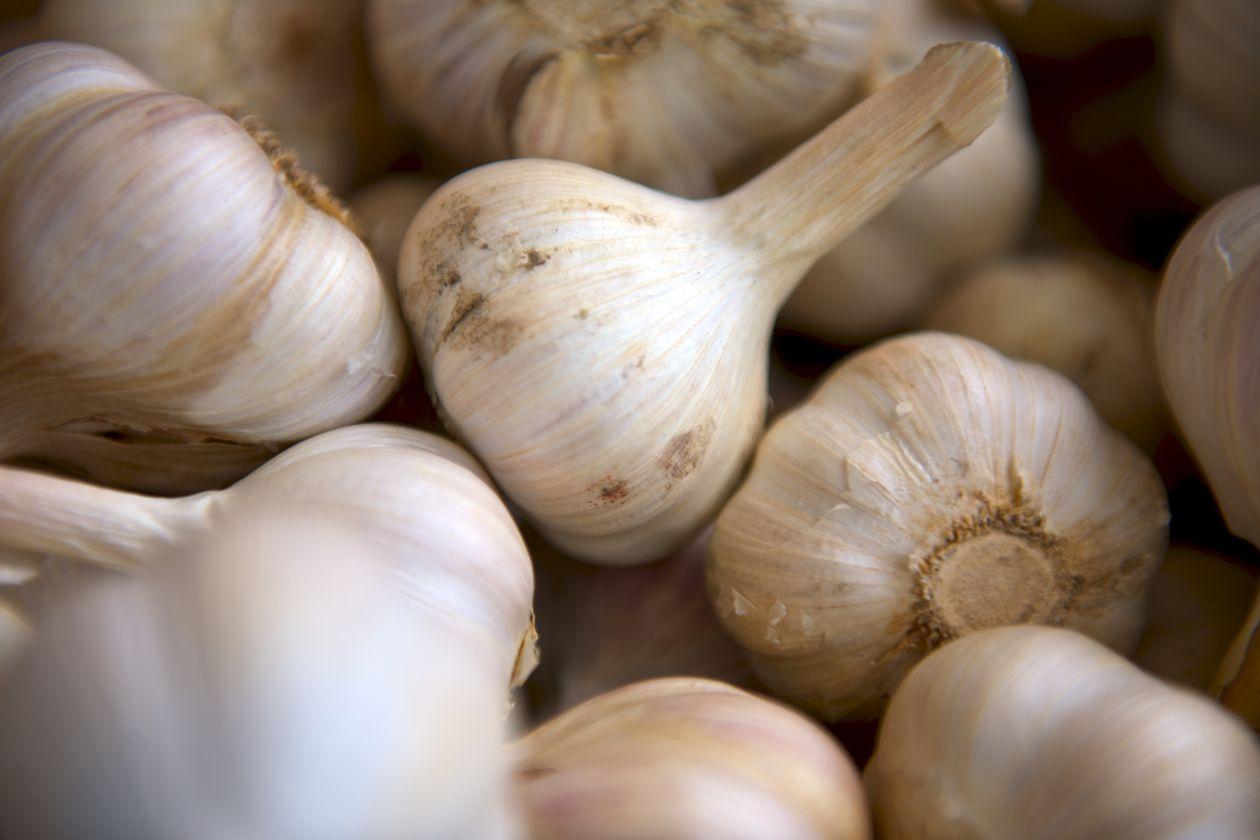 "Free photo ""Garlic"" by Matthew Pilachowski"