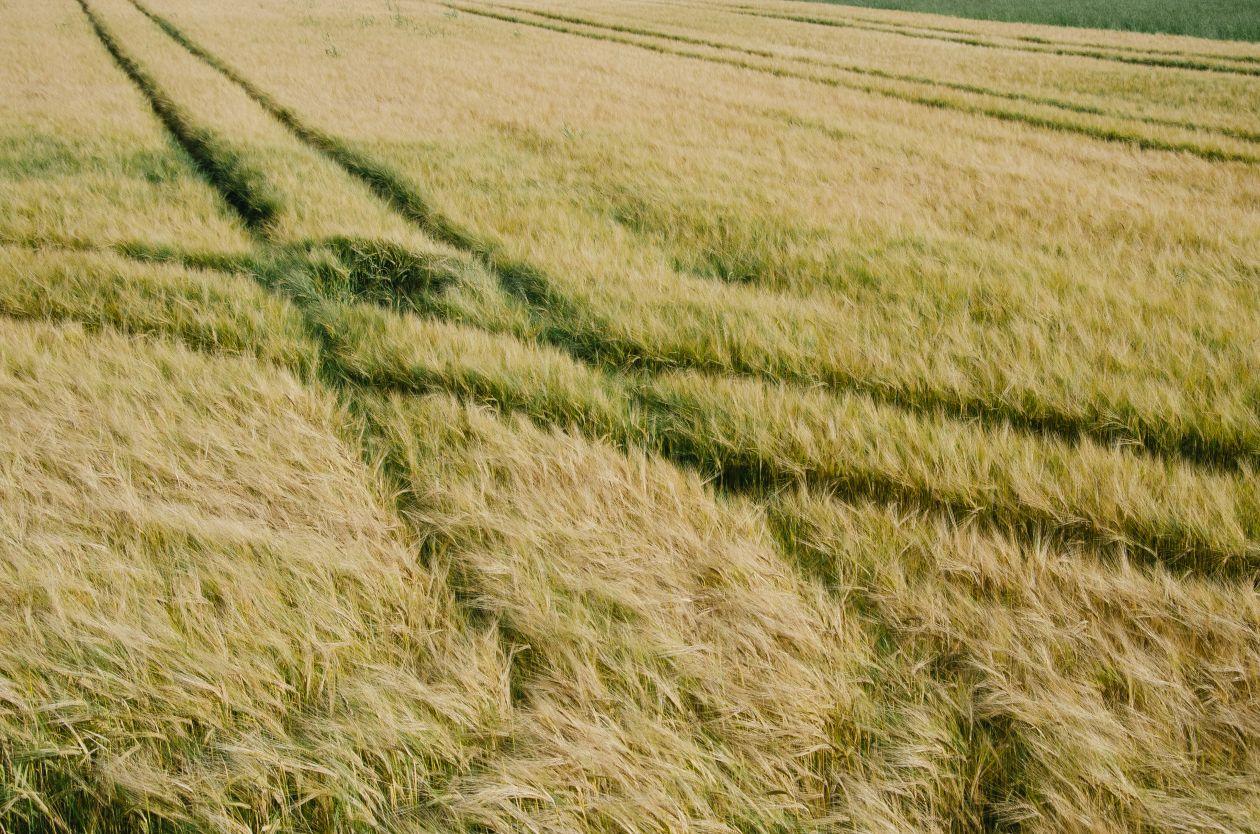 "Free photo ""Grass"" by Dominik Martin"