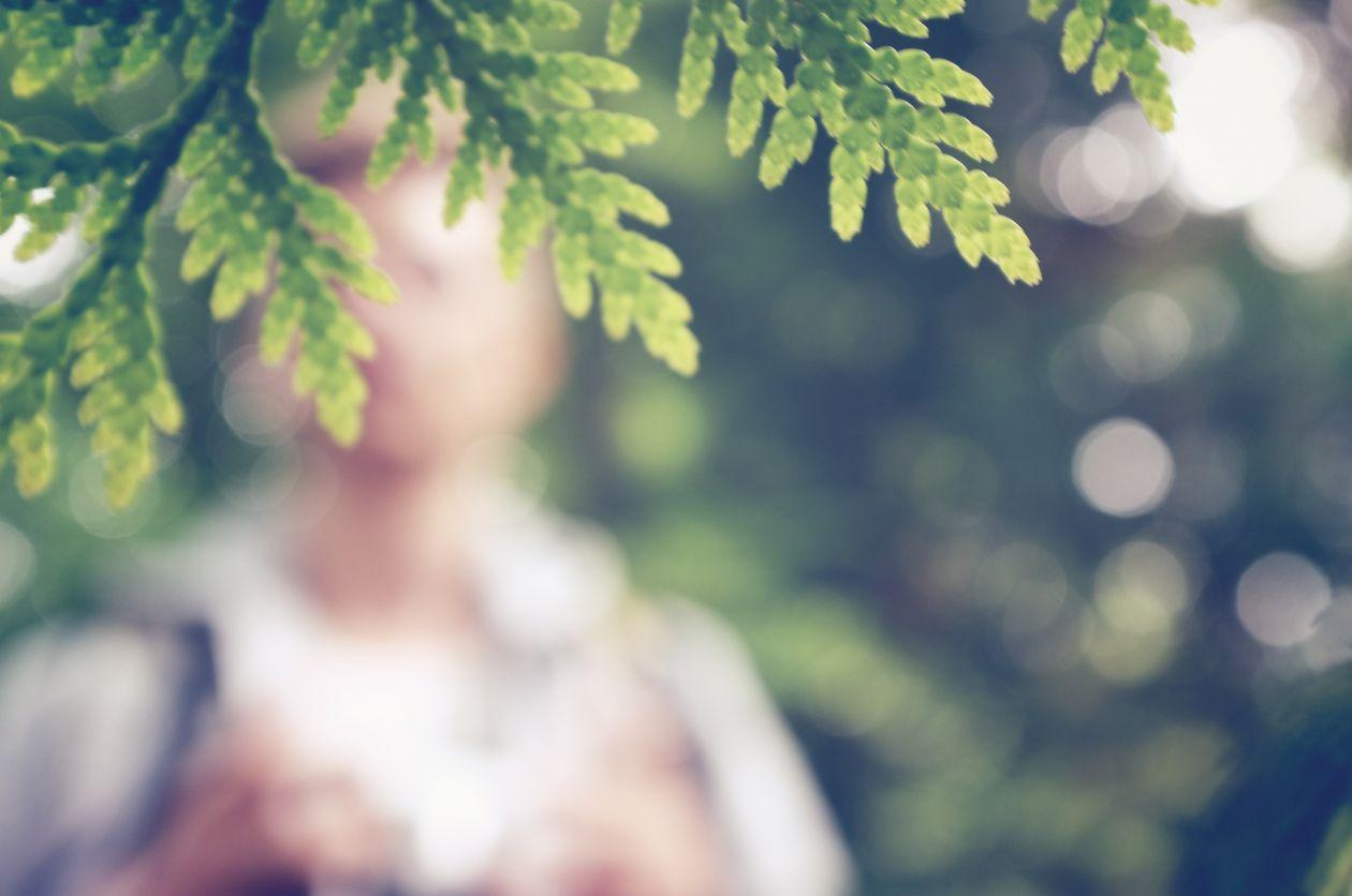 """Free photo """"Branch"""" by Patrik Göthe"""