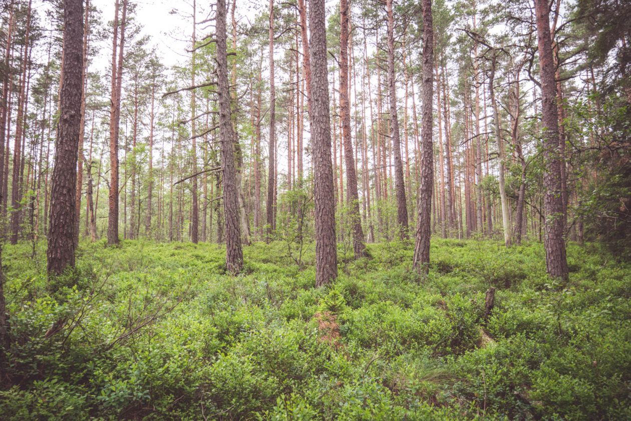 "Free photo ""Forest"" by Jon Flobrant"