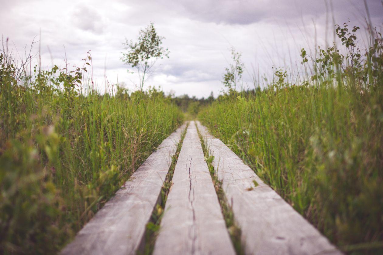 "Free photo ""Path"" by Jon Flobrant"