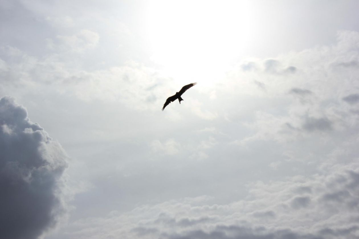 """Free photo """"Bird"""" by Naveen Chandra"""