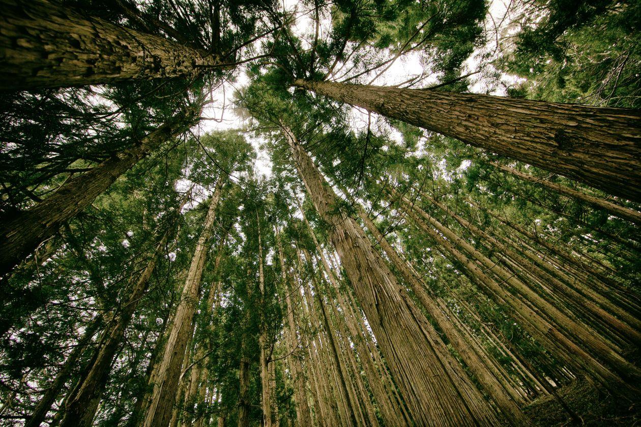 """Free photo """"Tree"""" by Kim Daniel"""