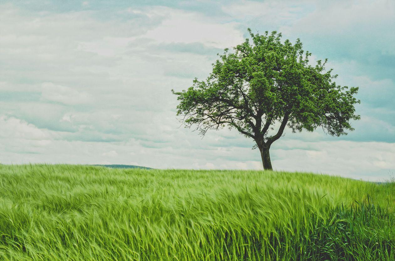 """Free photo """"Field"""" by Johann Siemens"""
