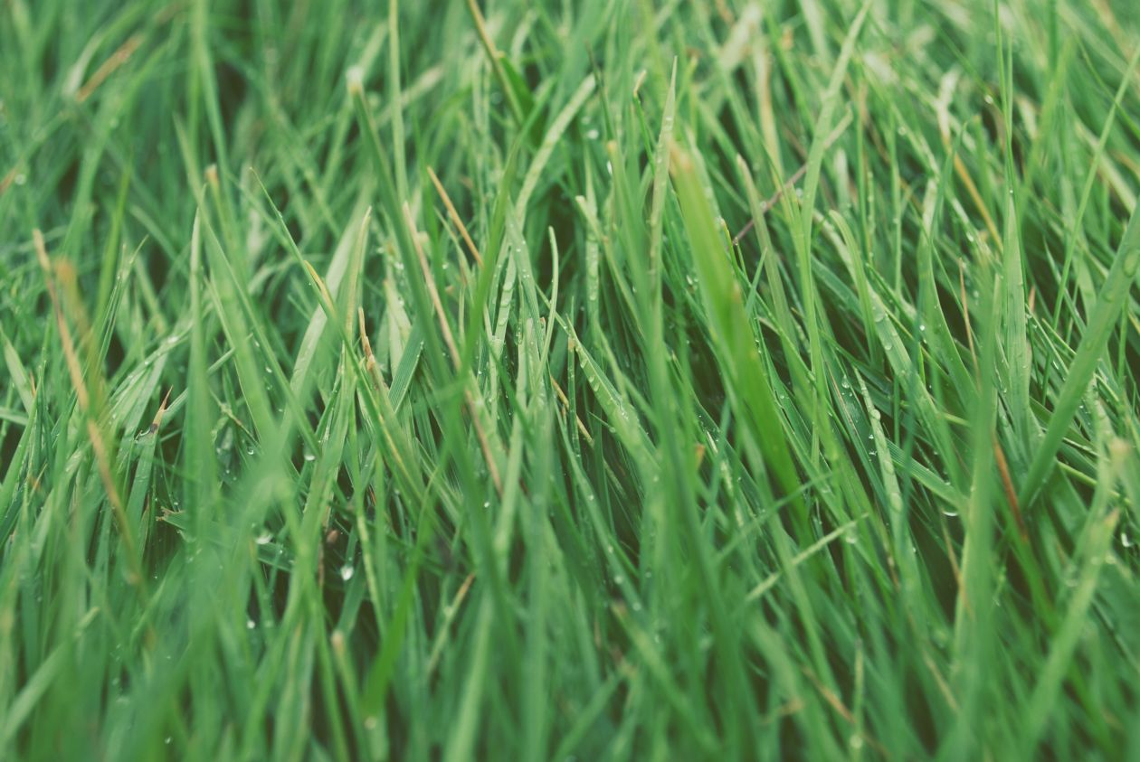 "Free photo ""Grass"" by Sujan Sundareswaran"