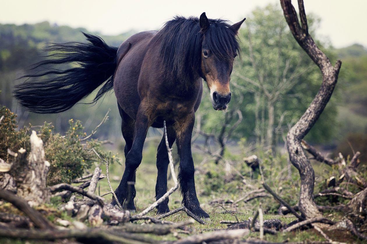 "Free photo ""Horse"" by Gabriela Kucerova"
