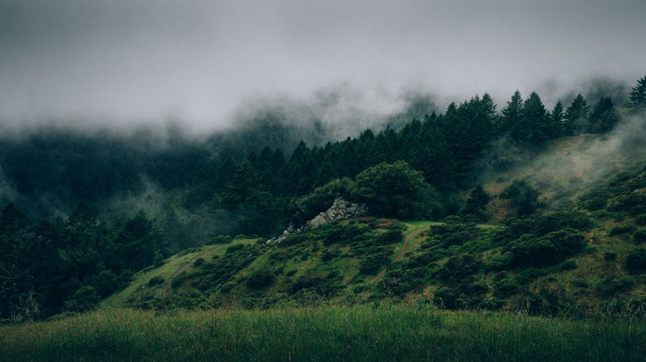 "Free photo ""Fog"" by FORREST CAVALE"