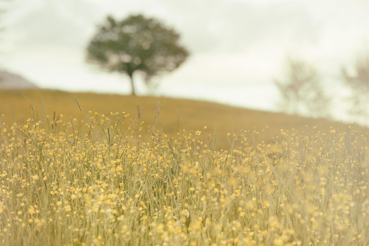 "Free photo ""Meadow"" by Silvestri Matteo"