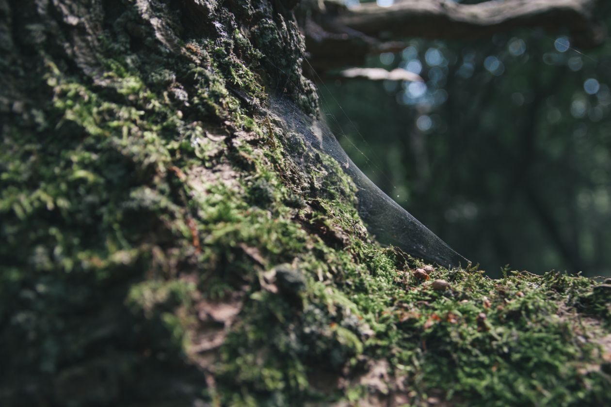 """Free photo """"Moss"""" by Davey Heuser"""