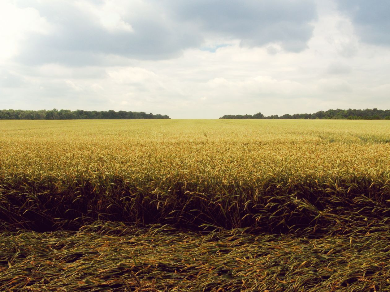 "Free photo ""Grain"" by Cornelia Büchse"