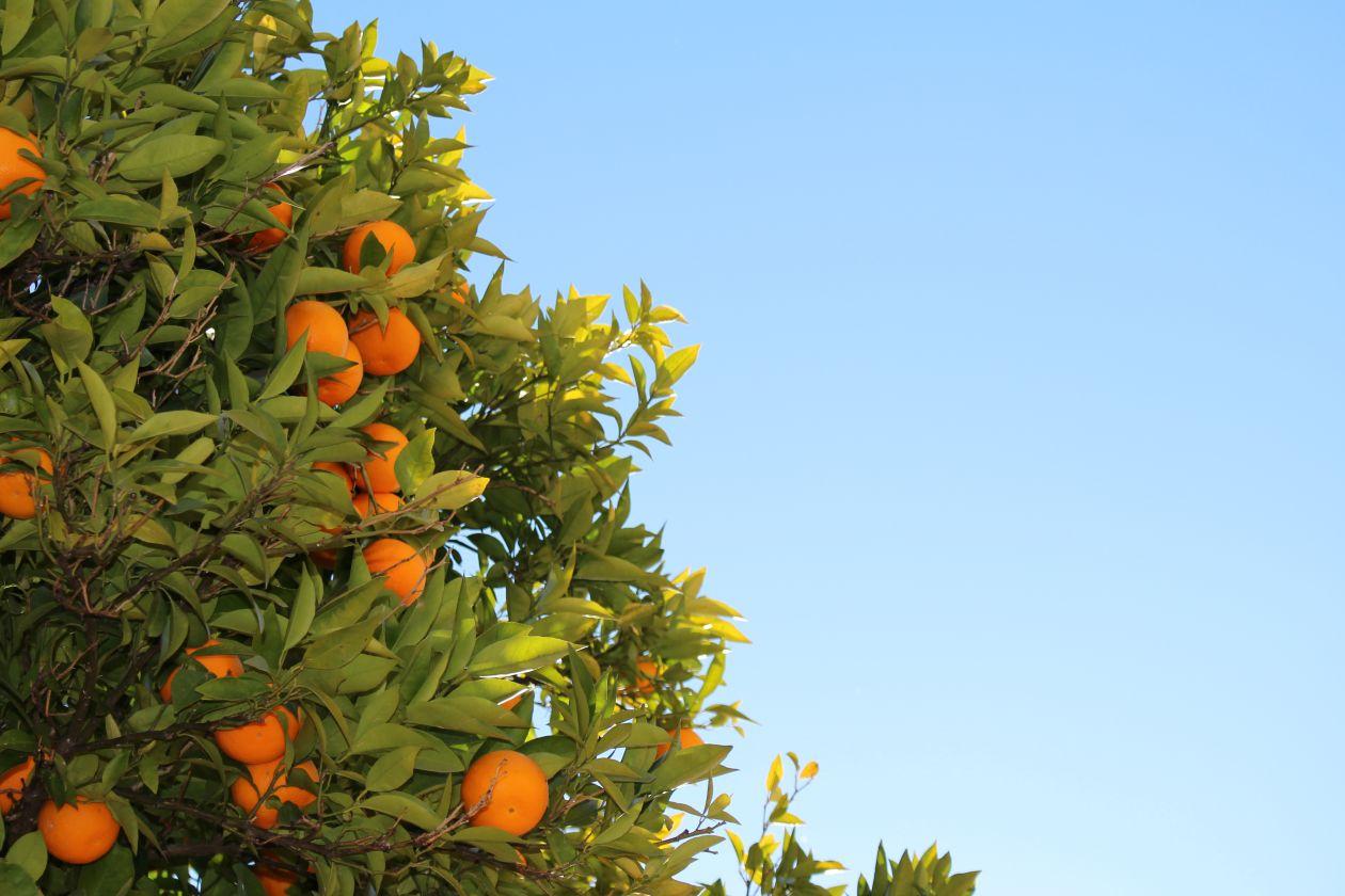 """Free photo """"Orange"""" by Brian Jimenez"""