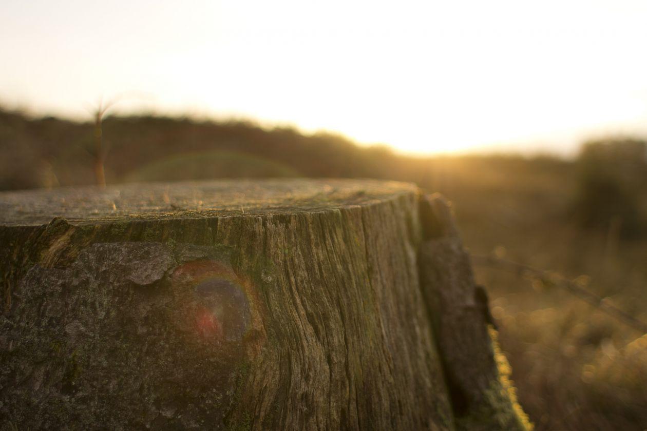 "Free photo ""Stump"" by Oisin Conolly"