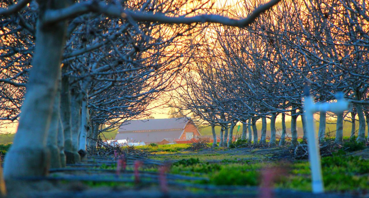 "Free photo ""Orchard"" by Jennifer Langley"