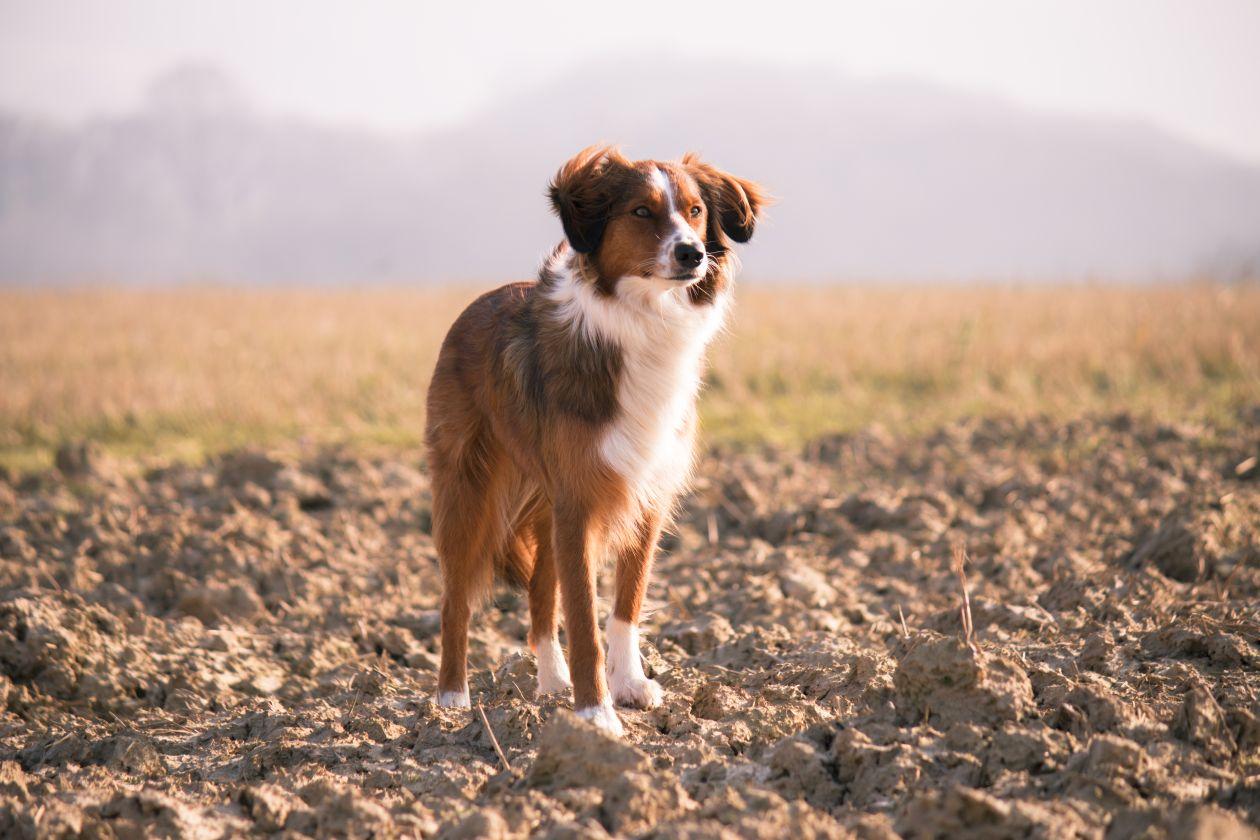 "Free photo ""Dog"" by Julia Janeta"