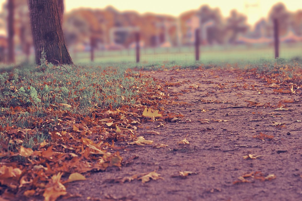 "Free photo ""Path"" by Tirza van Dijk"
