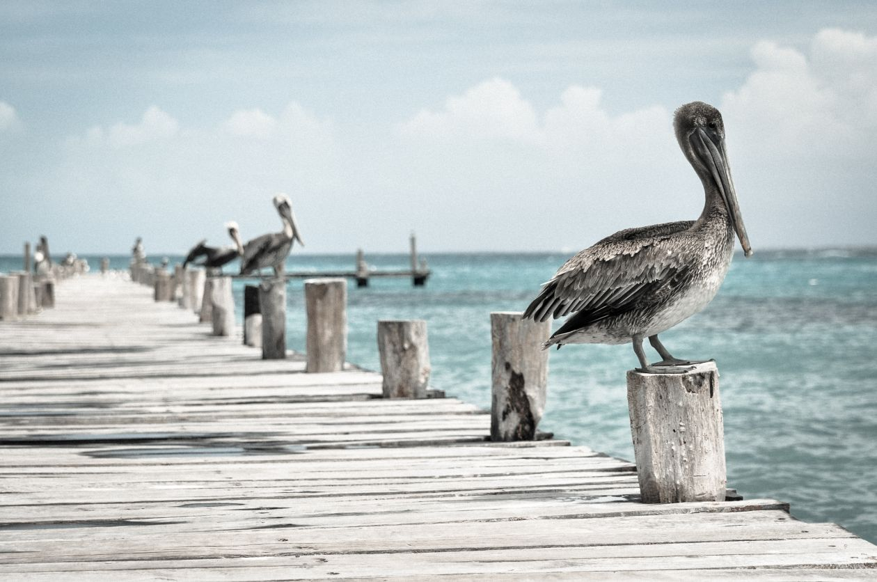 "Free photo ""Cancún"" by Yair Hazout"