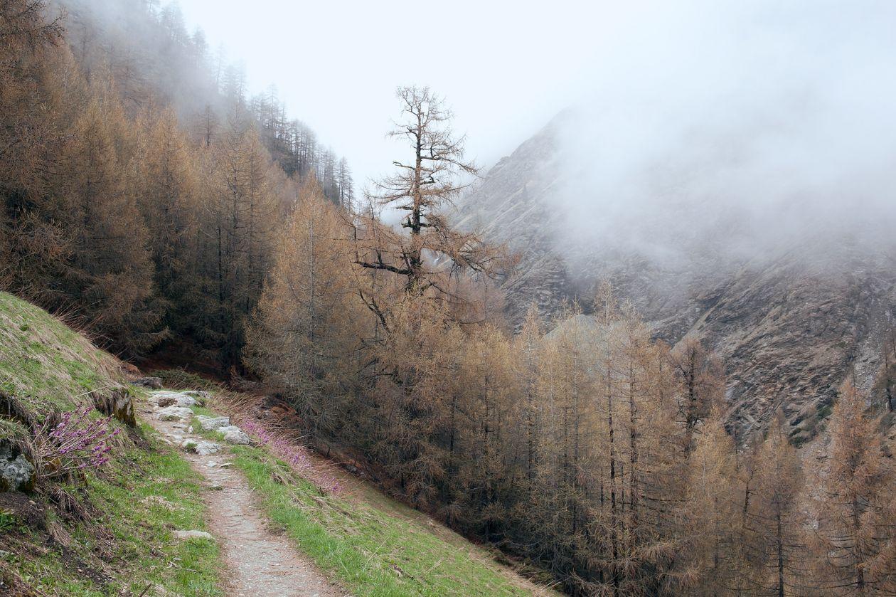 "Free photo ""Trail"" by Orlova Maria"