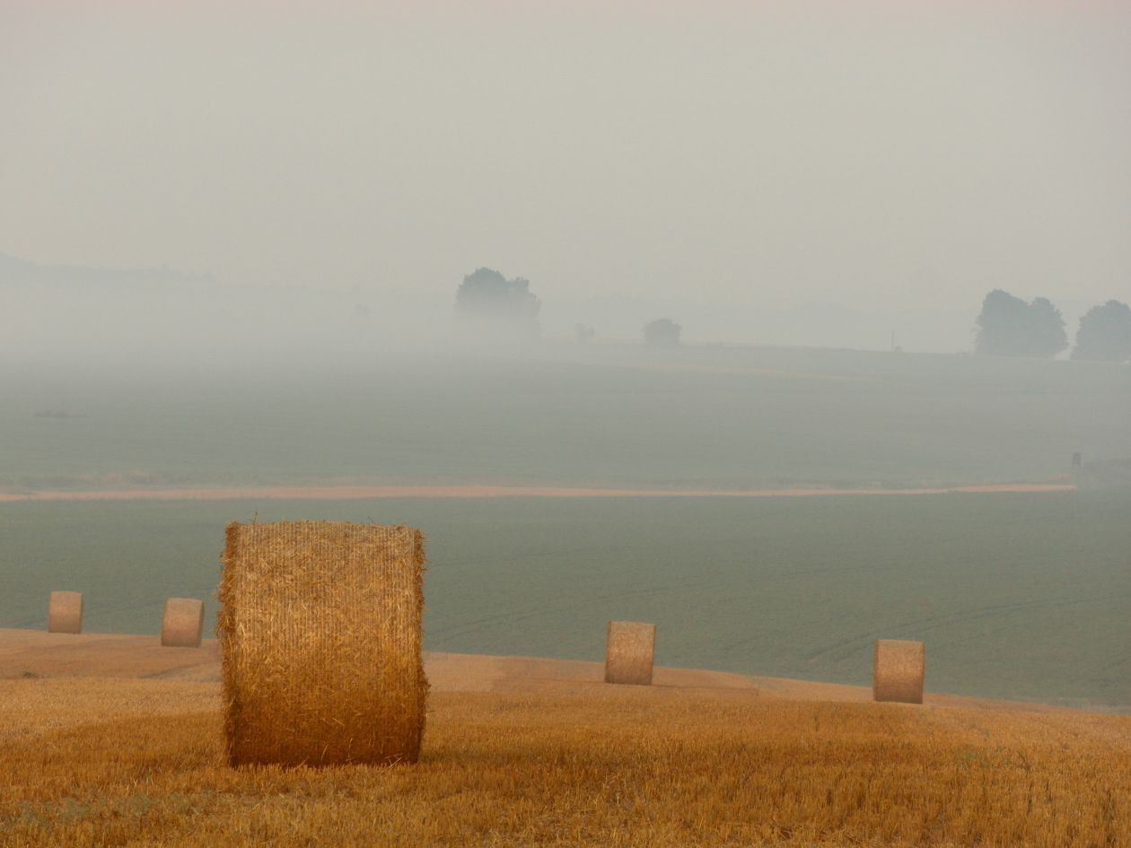 "Free photo ""Hay"" by Michal Kubicek"
