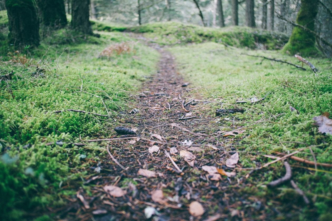 "Free photo ""Path"" by Paul Jarvis"