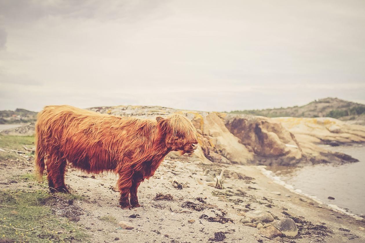 """Free photo """"Mammal"""" by Elias Carlsson"""