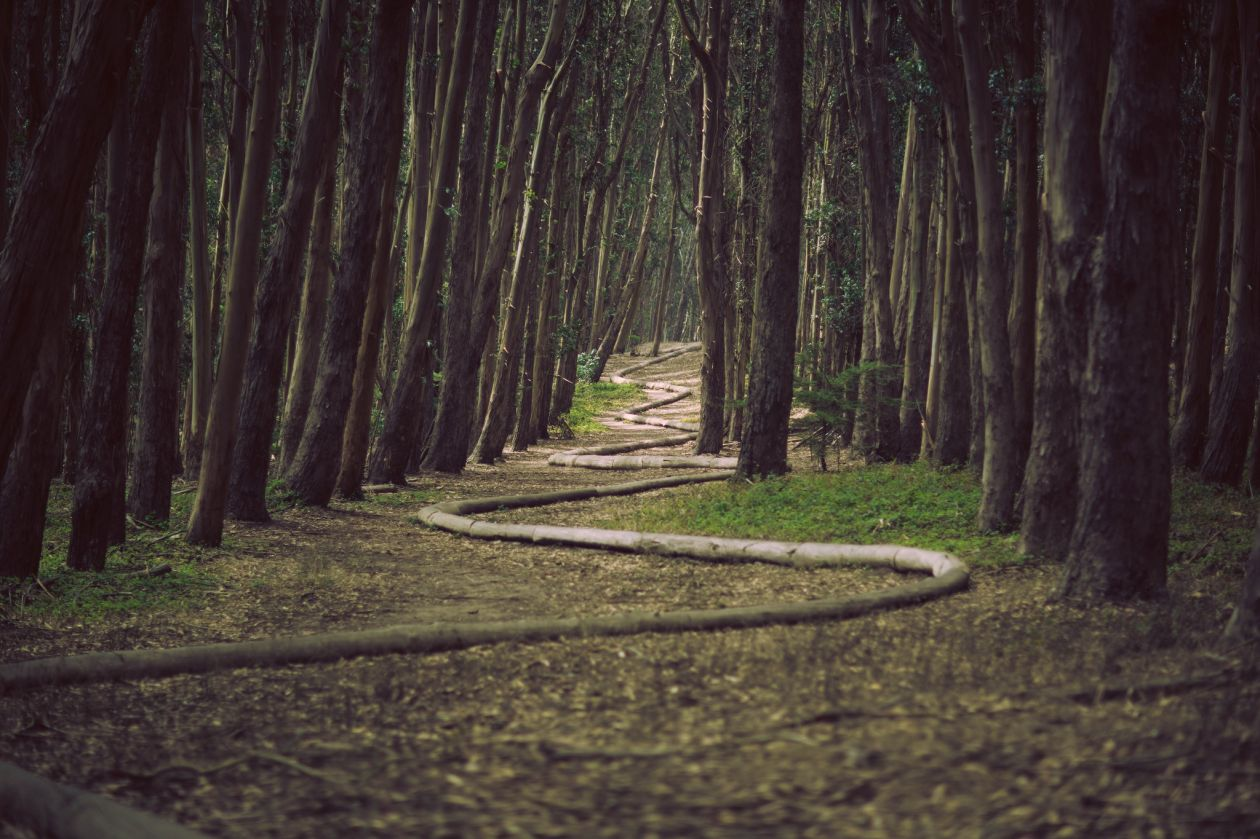 "Free photo ""Path"" by James Forbes"