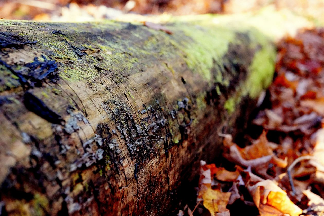 "Free photo ""Log"" by Chloe Benko-Prieur"