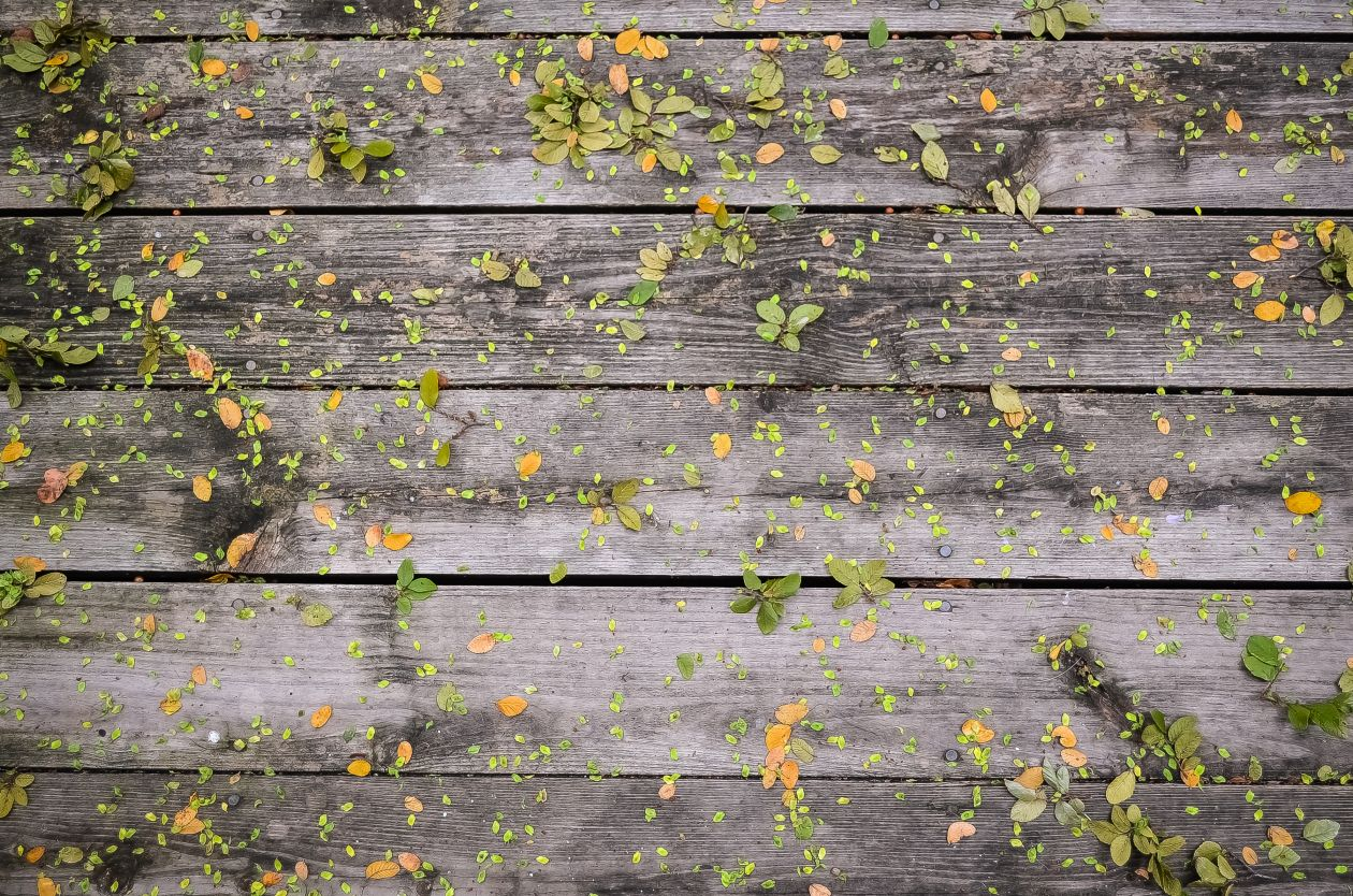 "Free photo ""Plank"" by Steve Richey"