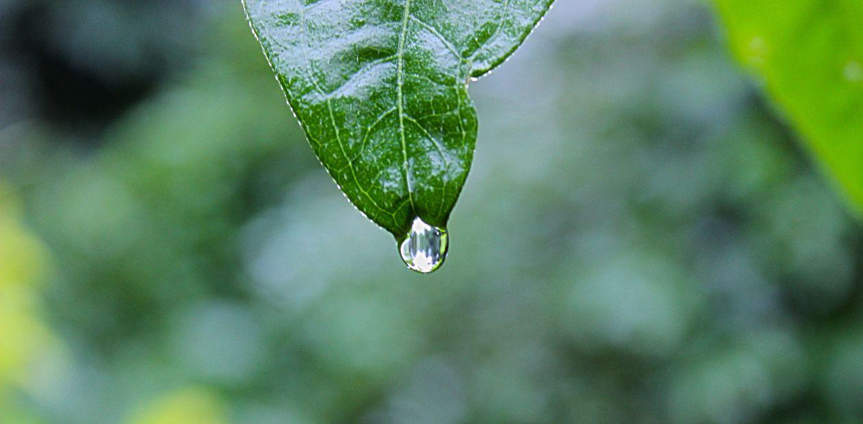 "Free photo ""Leaf"" by Shyamanta Baruah"