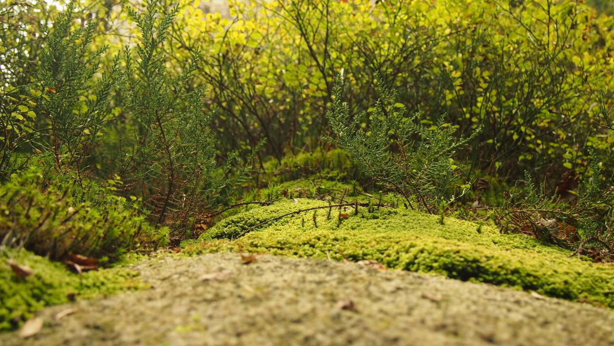 """Free photo """"Moss"""" by Marcin Czerwinski"""