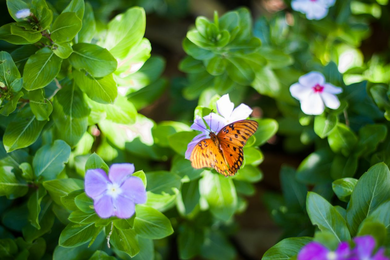 """Free photo """"Butterfly"""" by Ryan Jacques"""