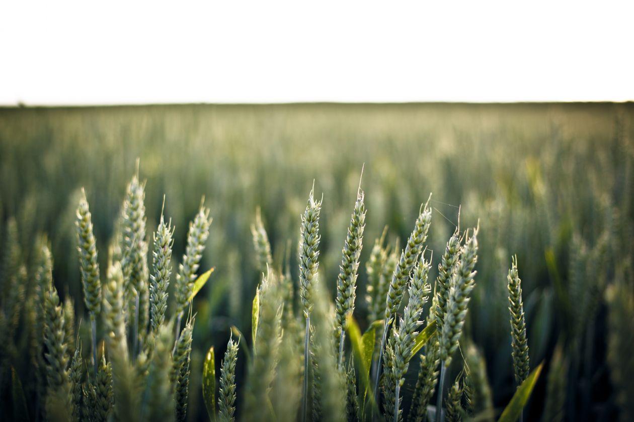 "Free photo ""Field"" by Lukas Schweizer"