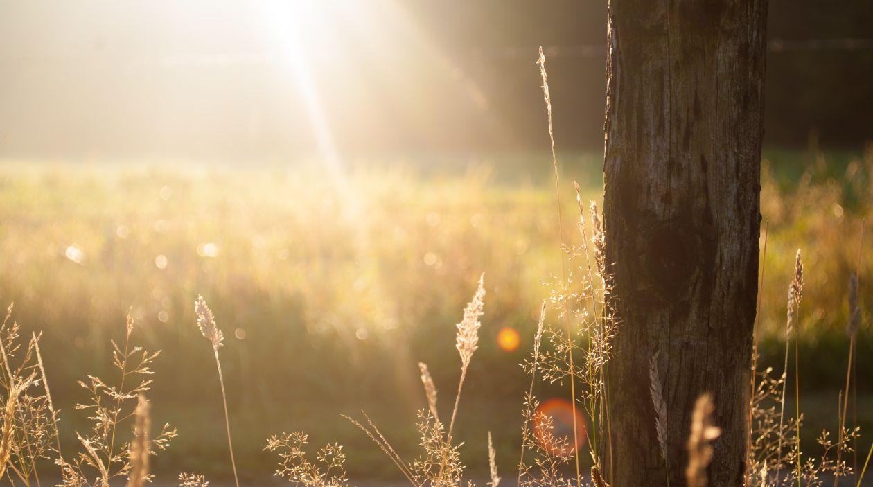 """Free photo """"Sunshine"""" by Zwaddi"""