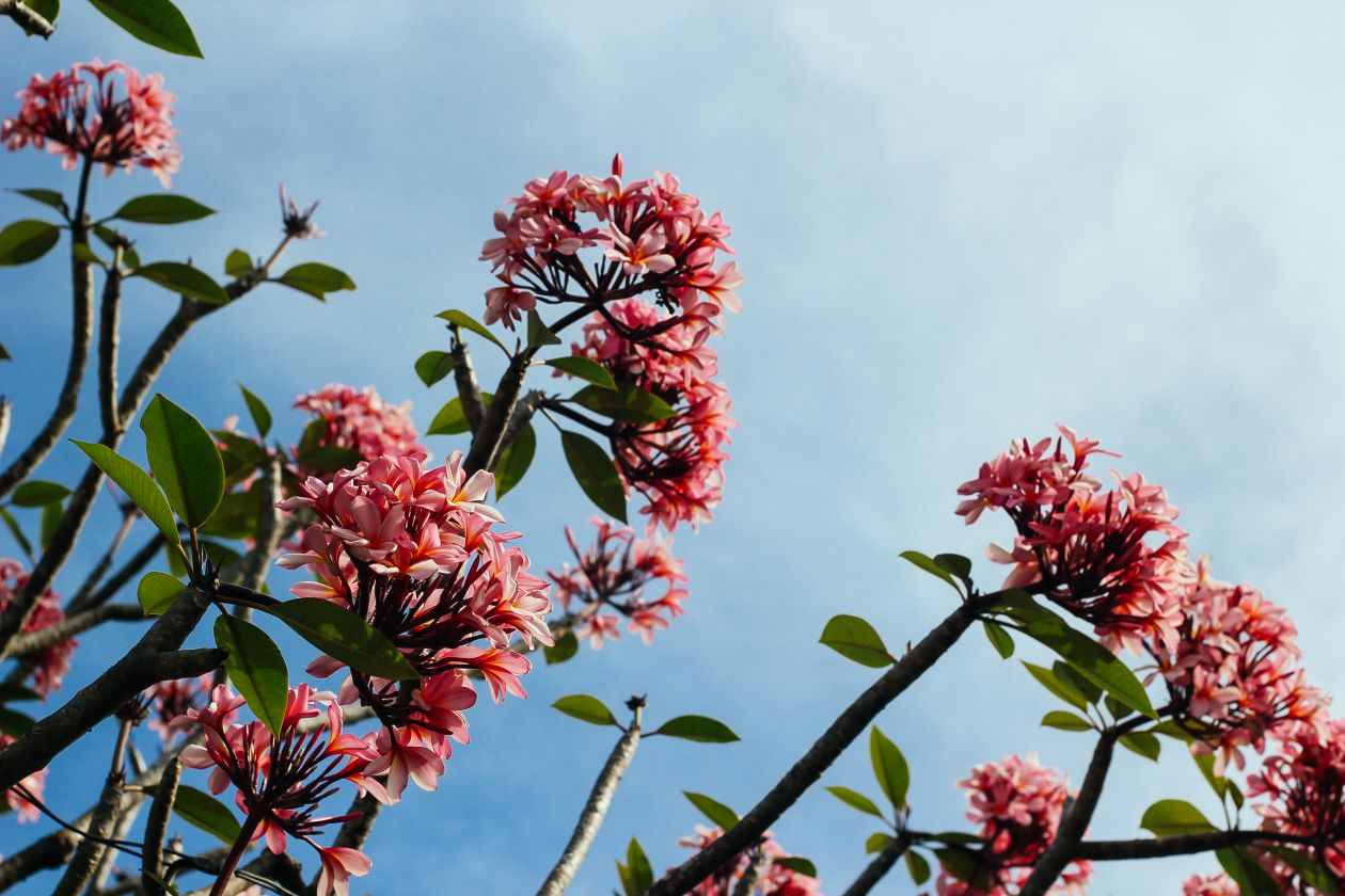 "Free photo ""Flower"""