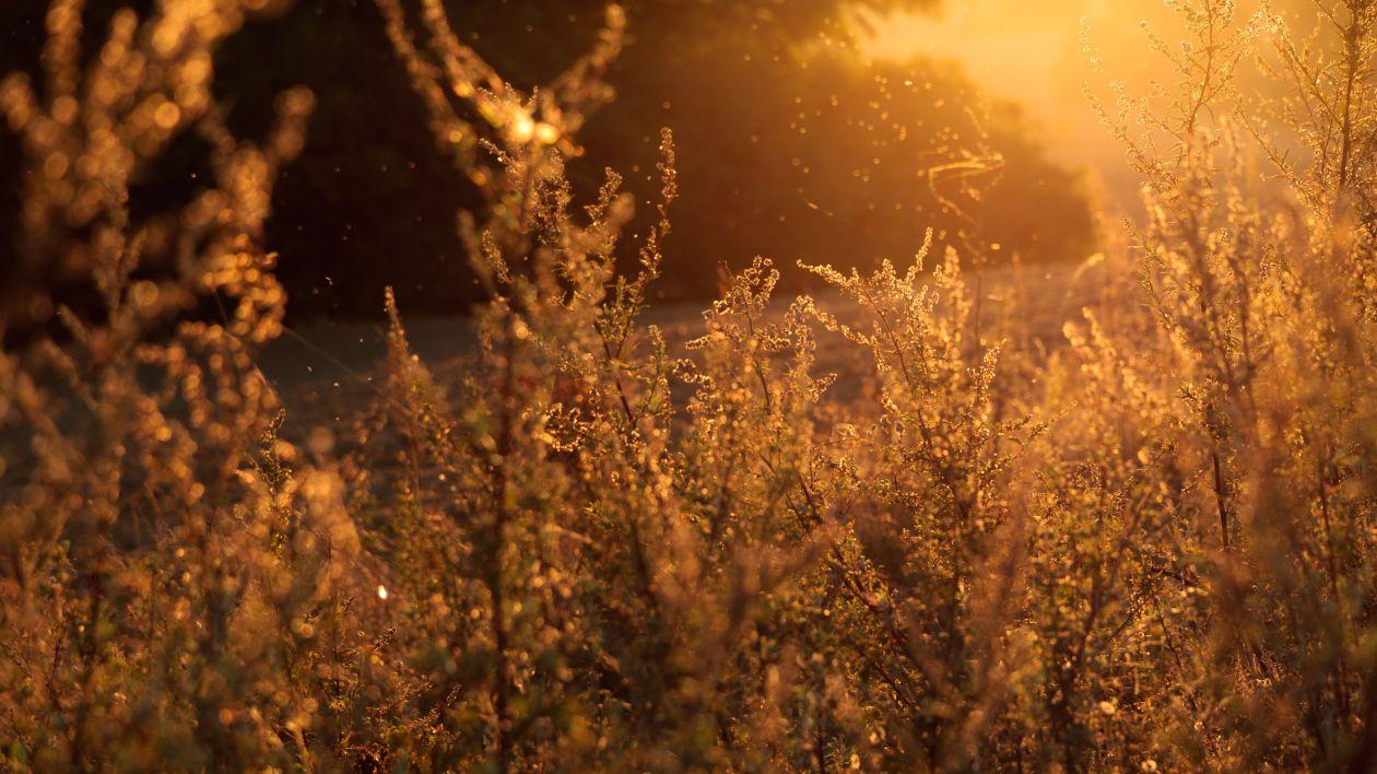 """Free photo """"Sunshine"""" by Lukasz Szmigiel"""
