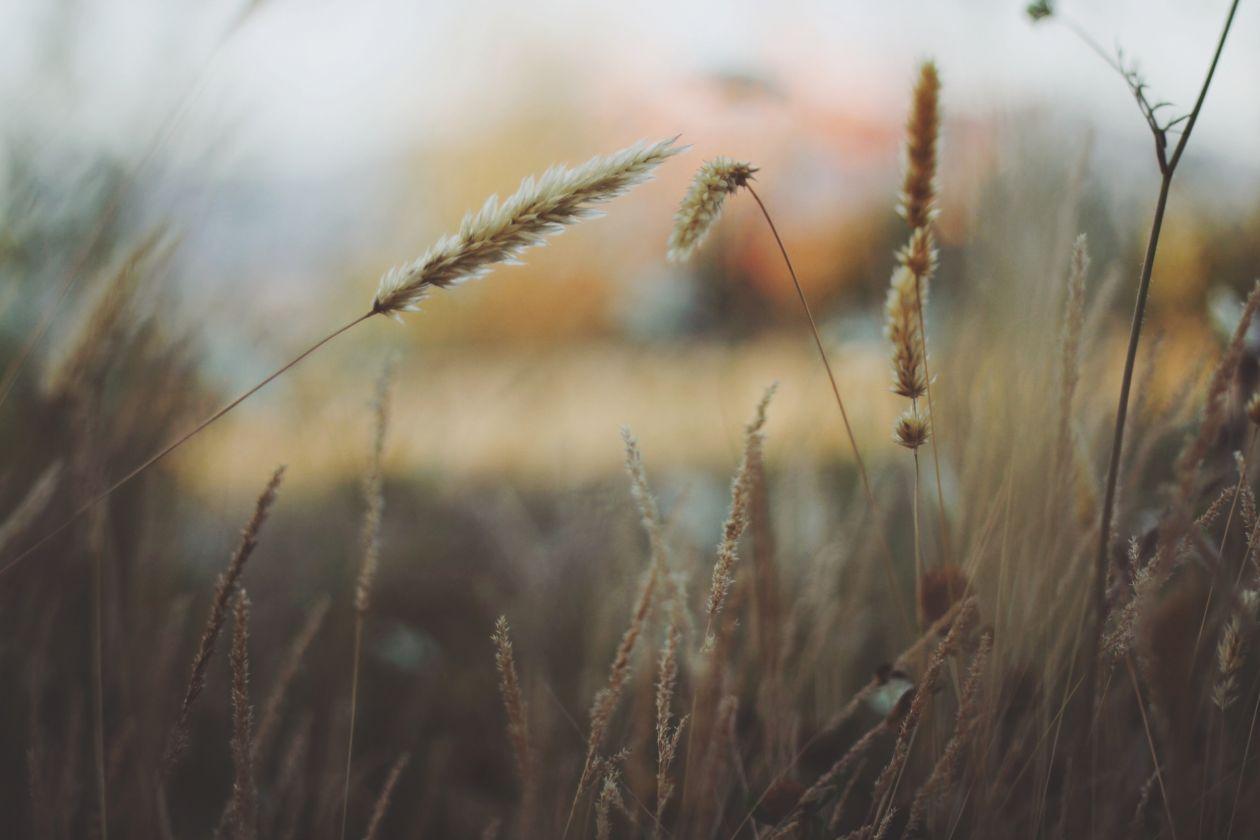 "Free photo ""Grass"""