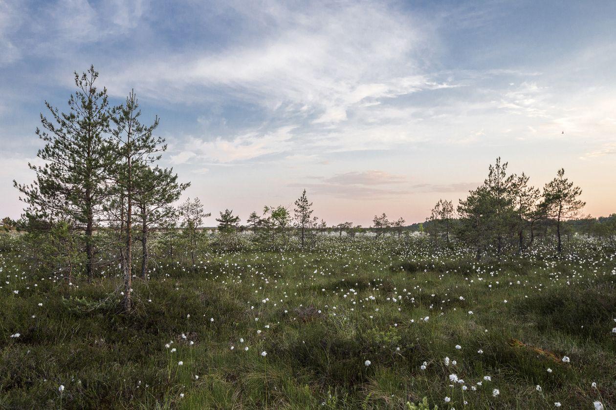 """Free photo """"Meadow"""" by Caroline Sada"""