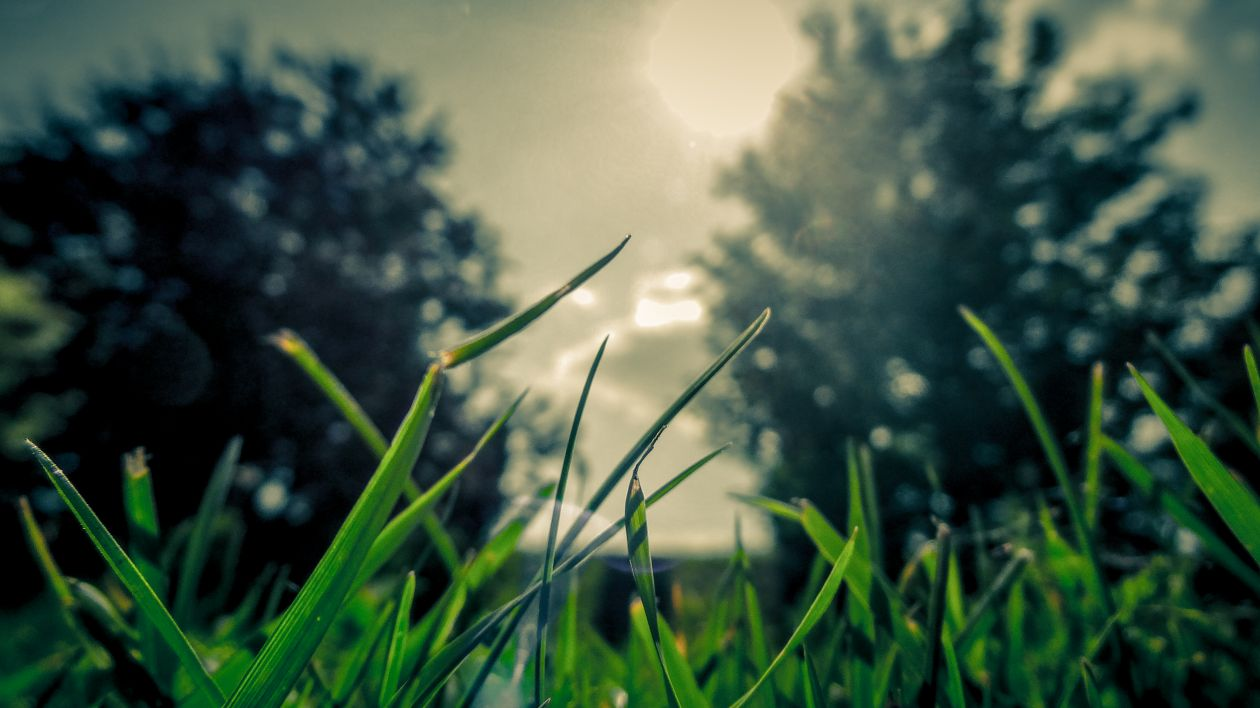 "Free photo ""Grass"" by Vectorbeast"