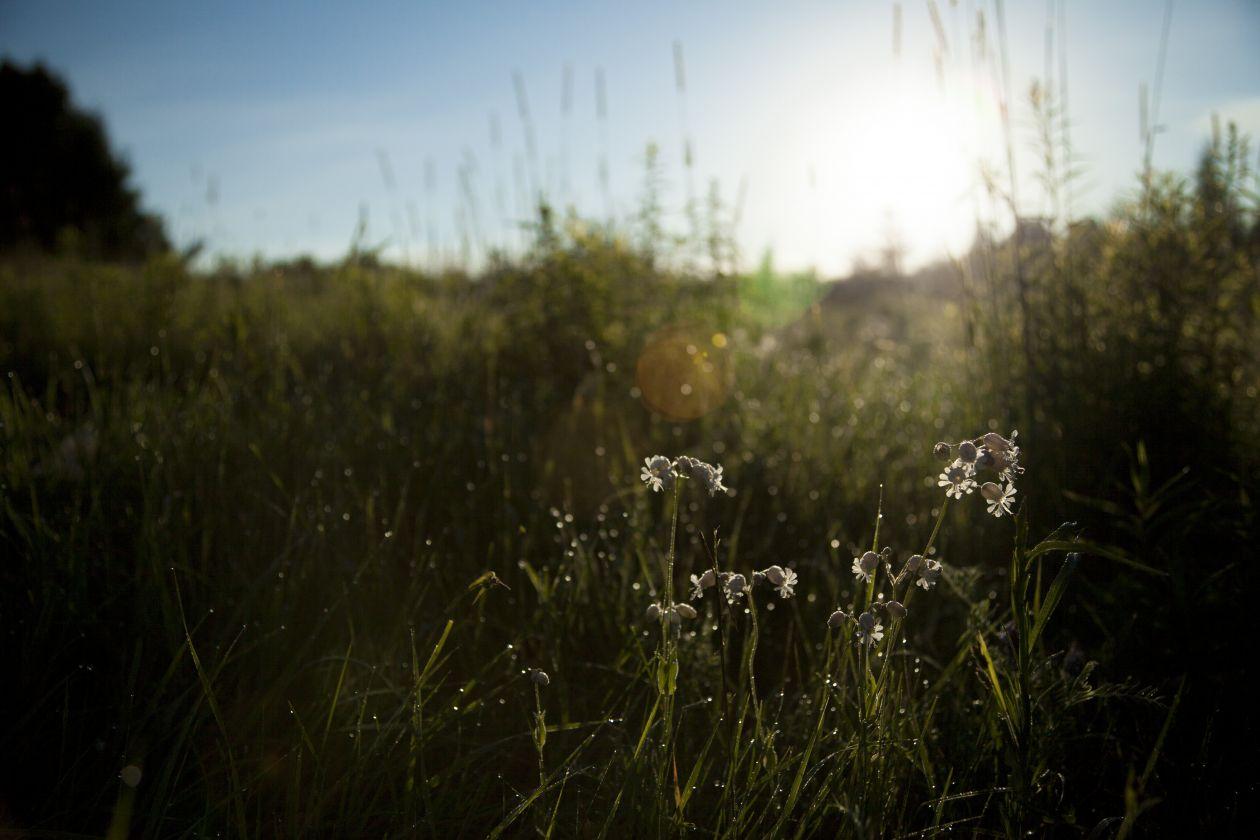 "Free photo ""Field"" by Alejandro Escamilla"