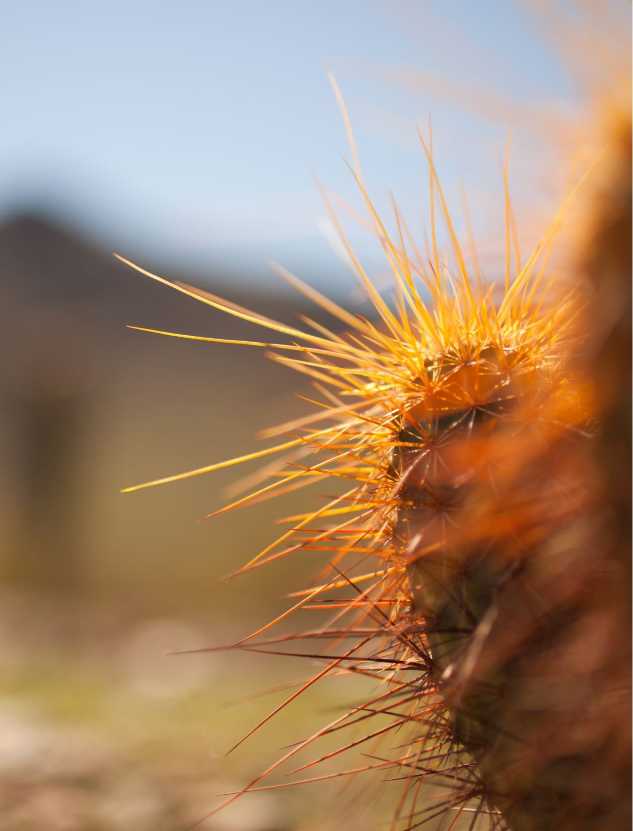 "Free photo ""Spiky"" by Shane Colella"