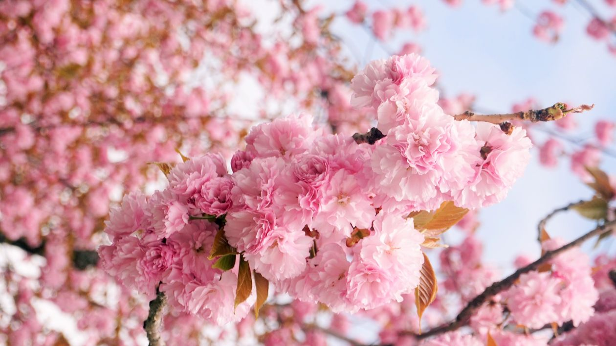 "Free photo ""Spring"""