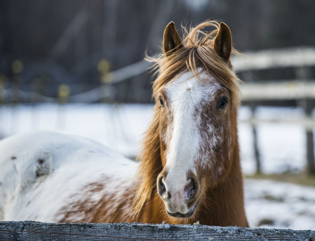 "Free photo ""Horse portrait"""