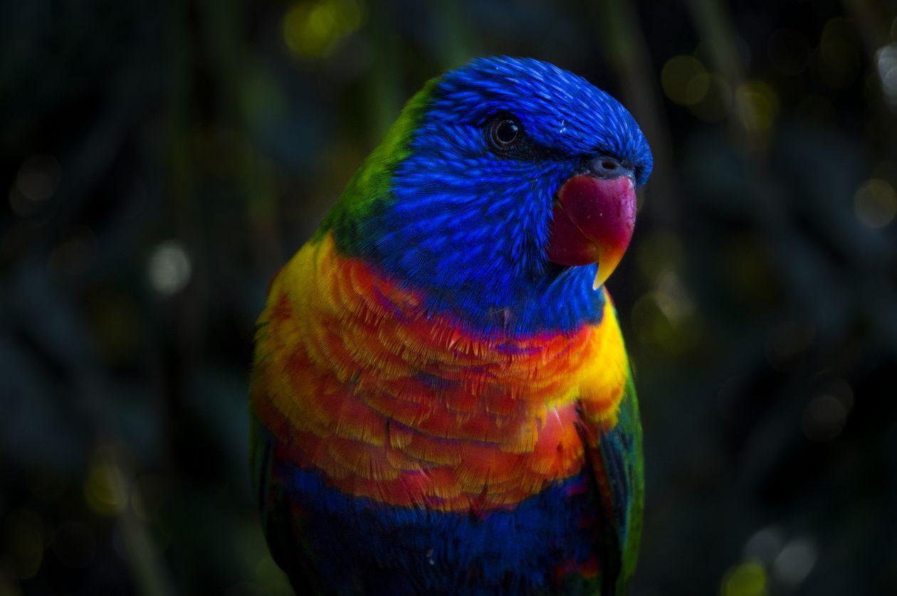 "Free photo ""Parrot"""